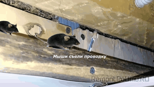Мыши съели проводку